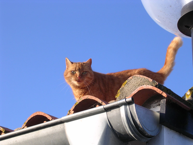 Maîtrise des populations de chats errants