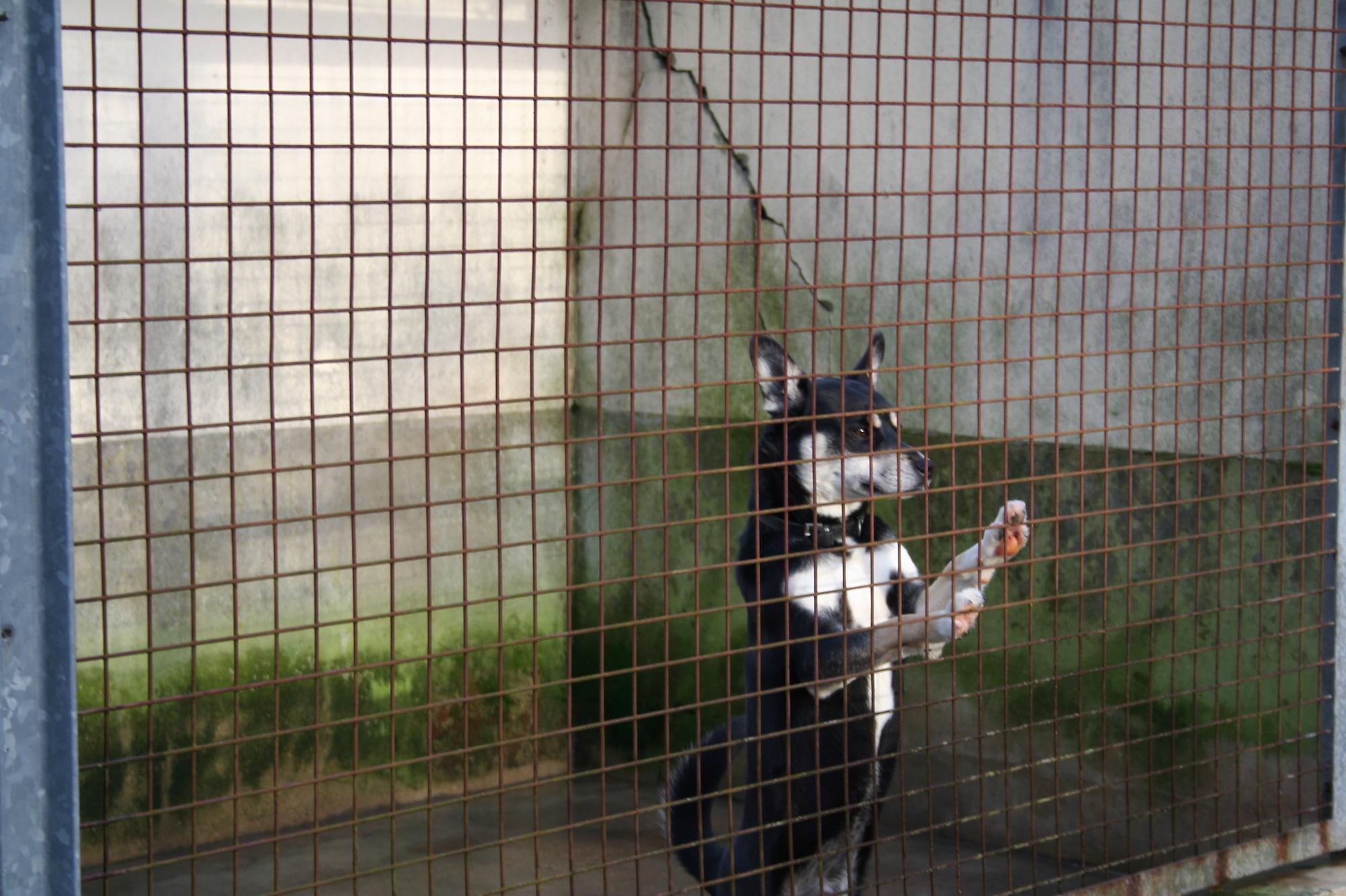 Read more about the article Fourrières animales : Pouvoir de police et obligations du maire