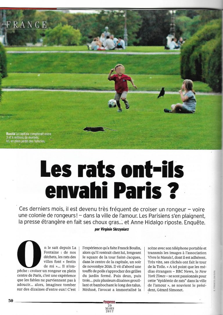Invasions de rats à Paris – Article de l'Express