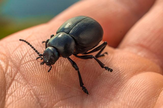 Les espèces invasives ré-émergentes