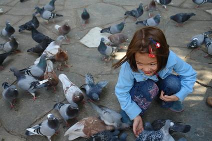 Problèmes de pigeons : Intérêts et limites des pigeonniers