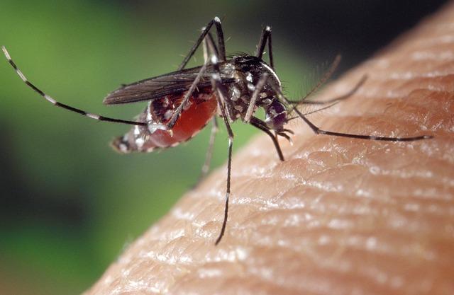 Chats, rats et humains : Nourritures & plats de résistance des moustiques