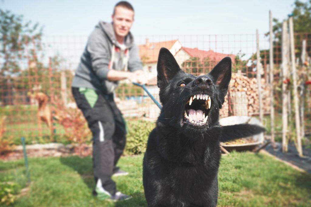 istav-chien-dangereux_122282828
