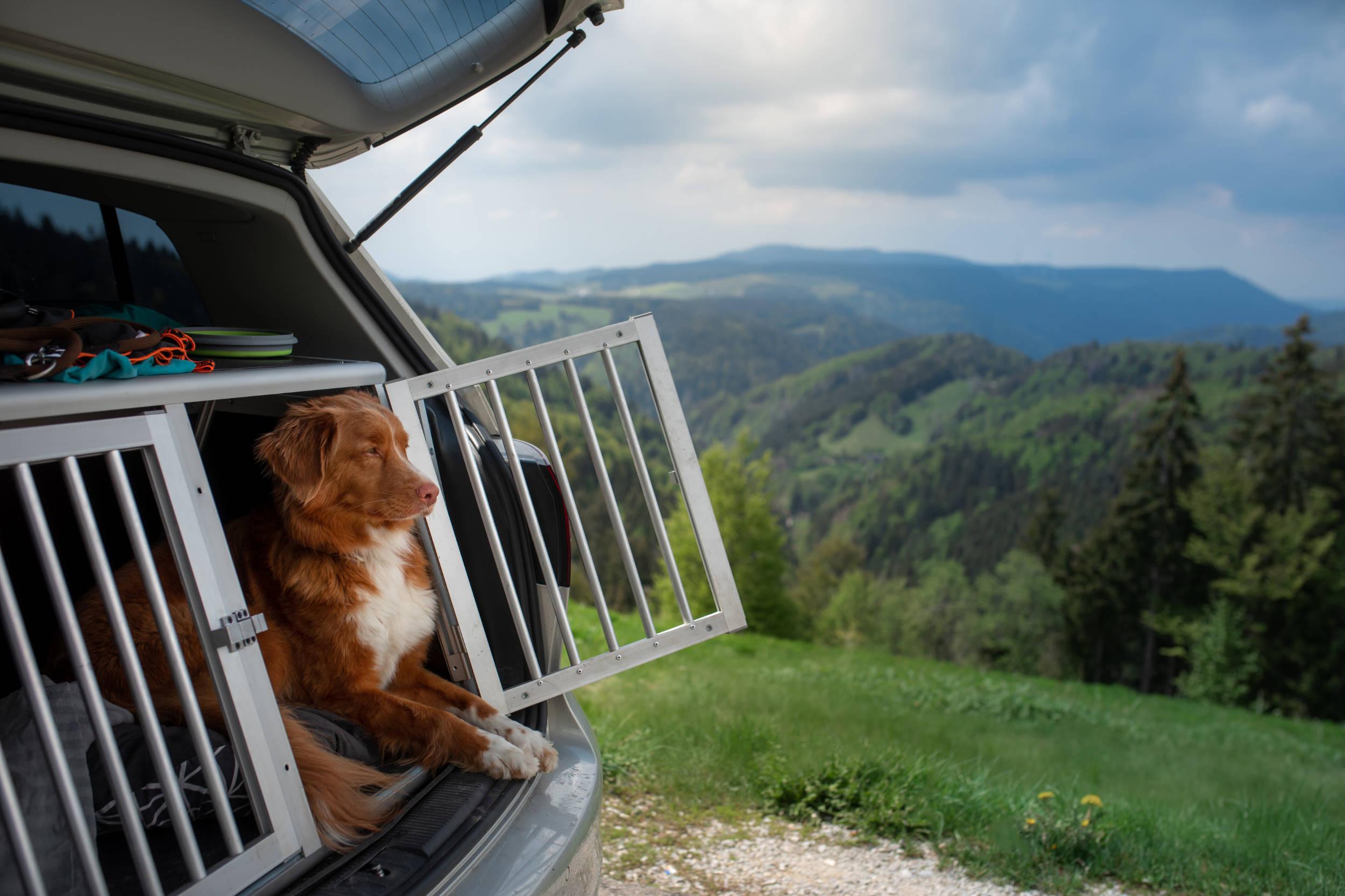 Habilitation pour le transport des animaux vivants (TAV)