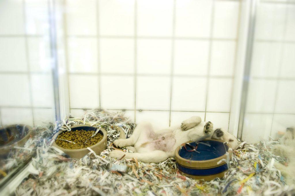 istav-formation-nettoyage-animalerie