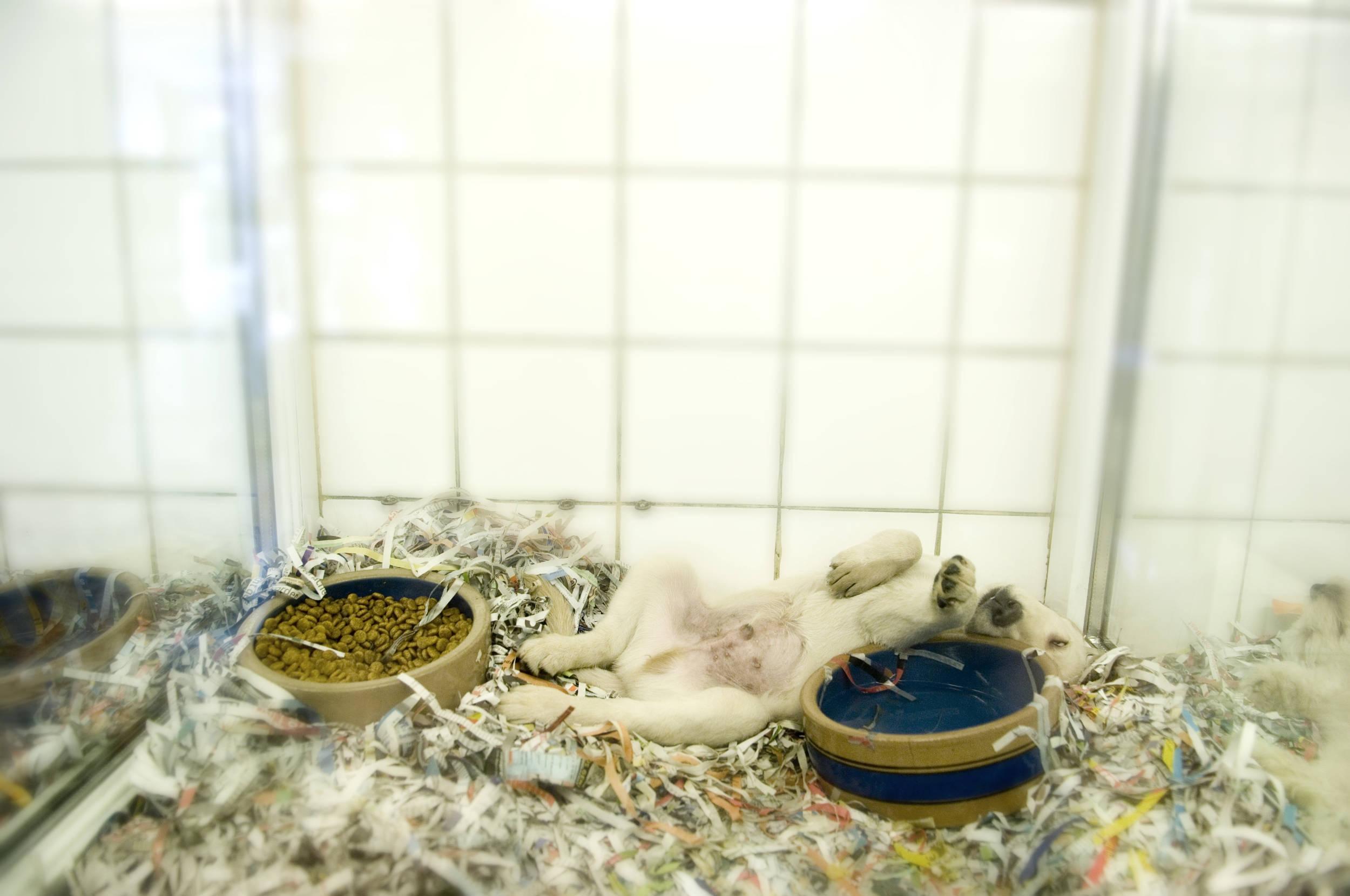 Read more about the article Nettoyage et désinfection en animalerie
