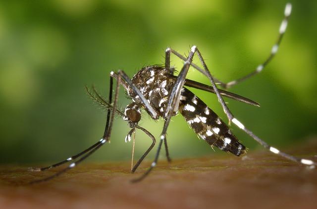 Le plan anti-dissémination de la dengue, du chikungunya et du Zika
