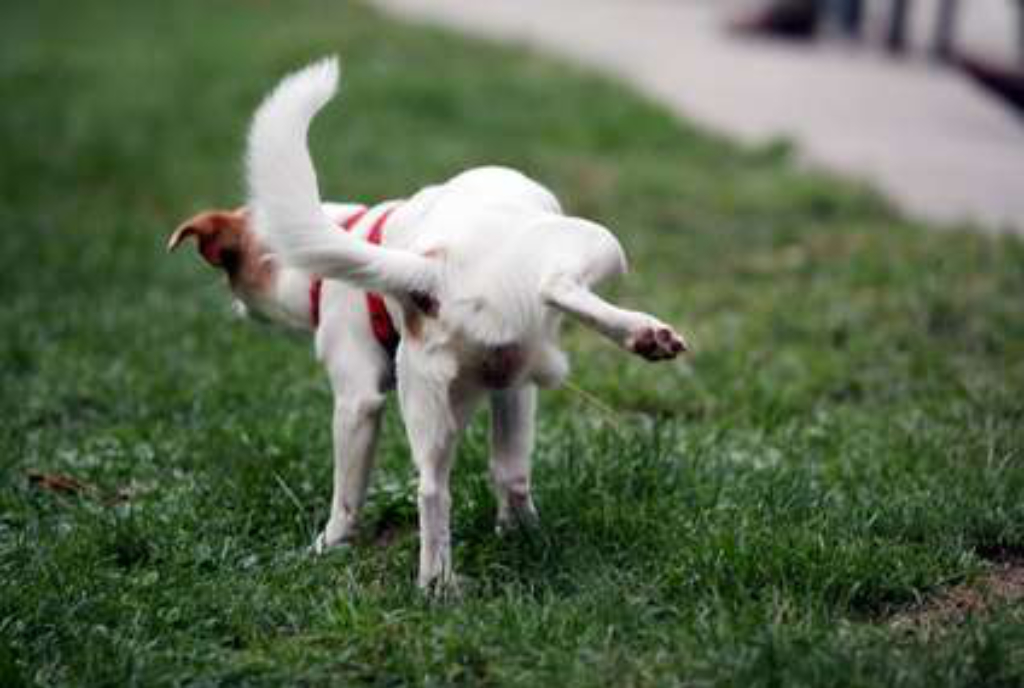 Read more about the article Propreté canine