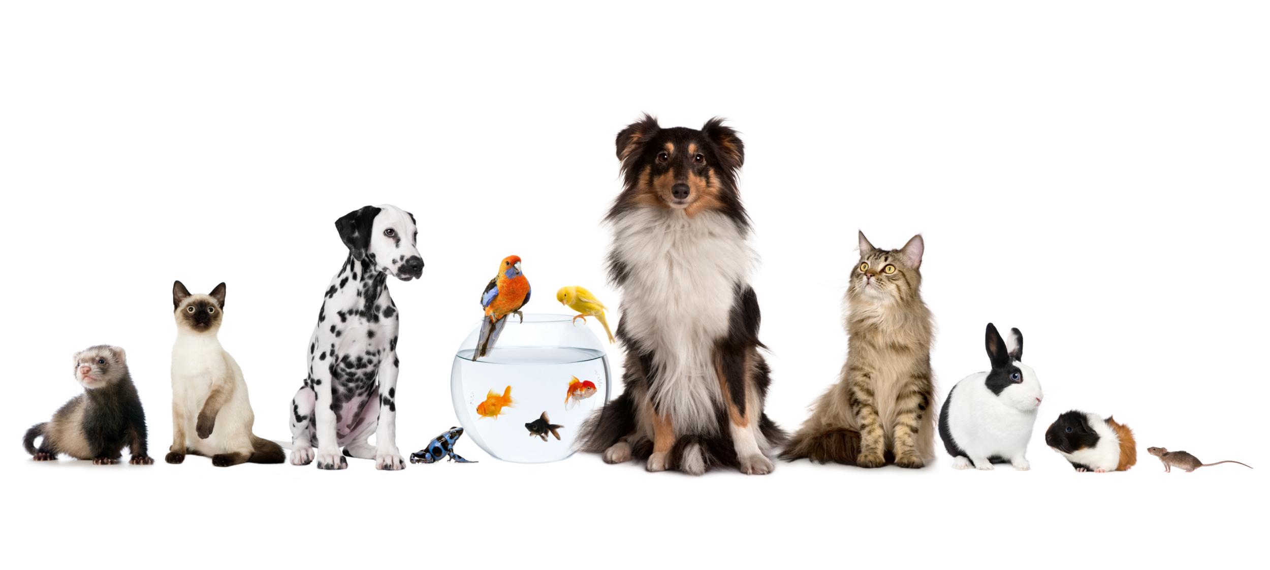 Protection des aliments en vrac pour animaux contre les insectes (mites alimentaires, charançons)