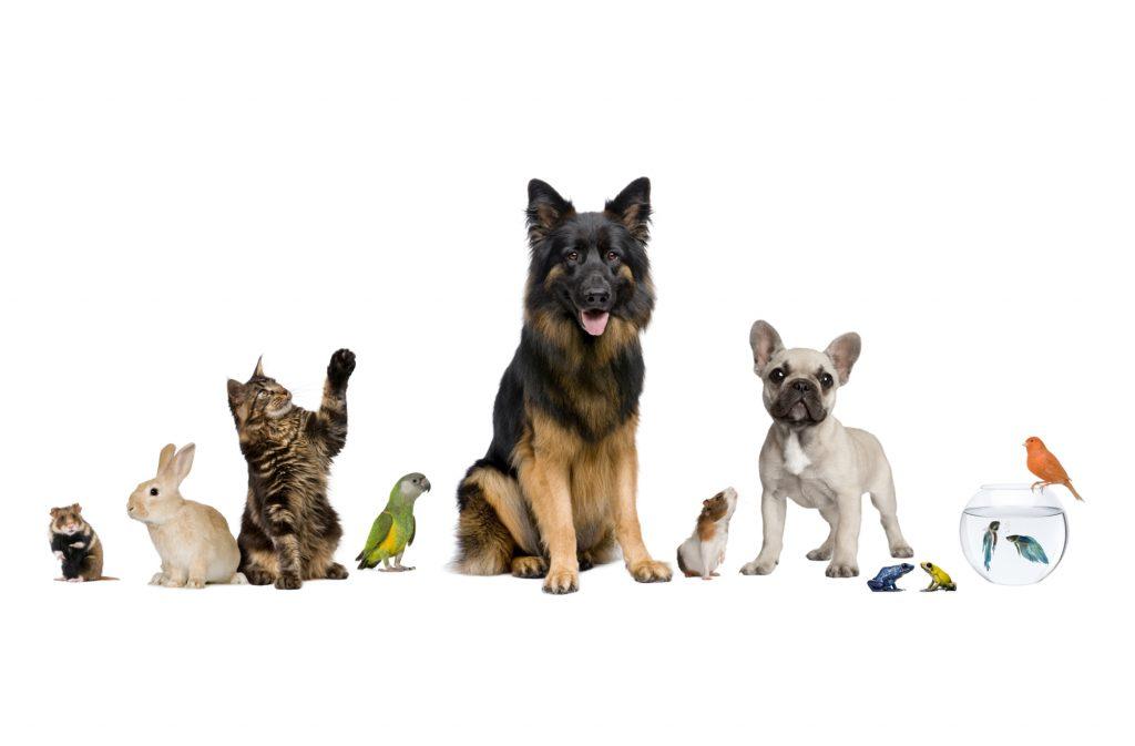istav animaux compagnie