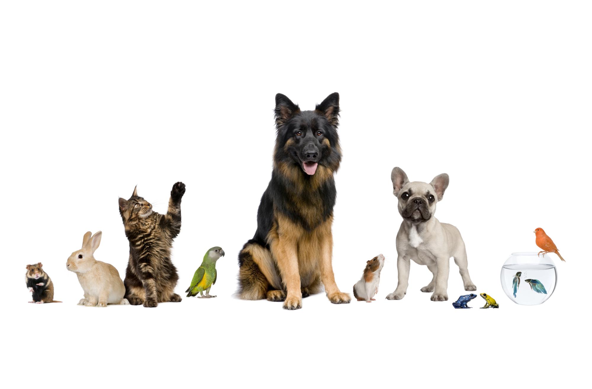 Attestation de connaissances pour les animaux de compagnie d'espèces domestiques – Chien, Chat, NAC (ACACED): Actualisation