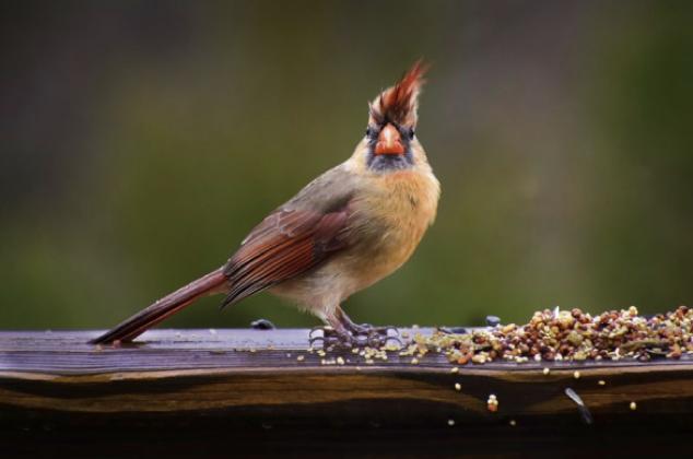 Nourrir les oiseaux en hiver, ce qu'il faut savoir avant de commencer