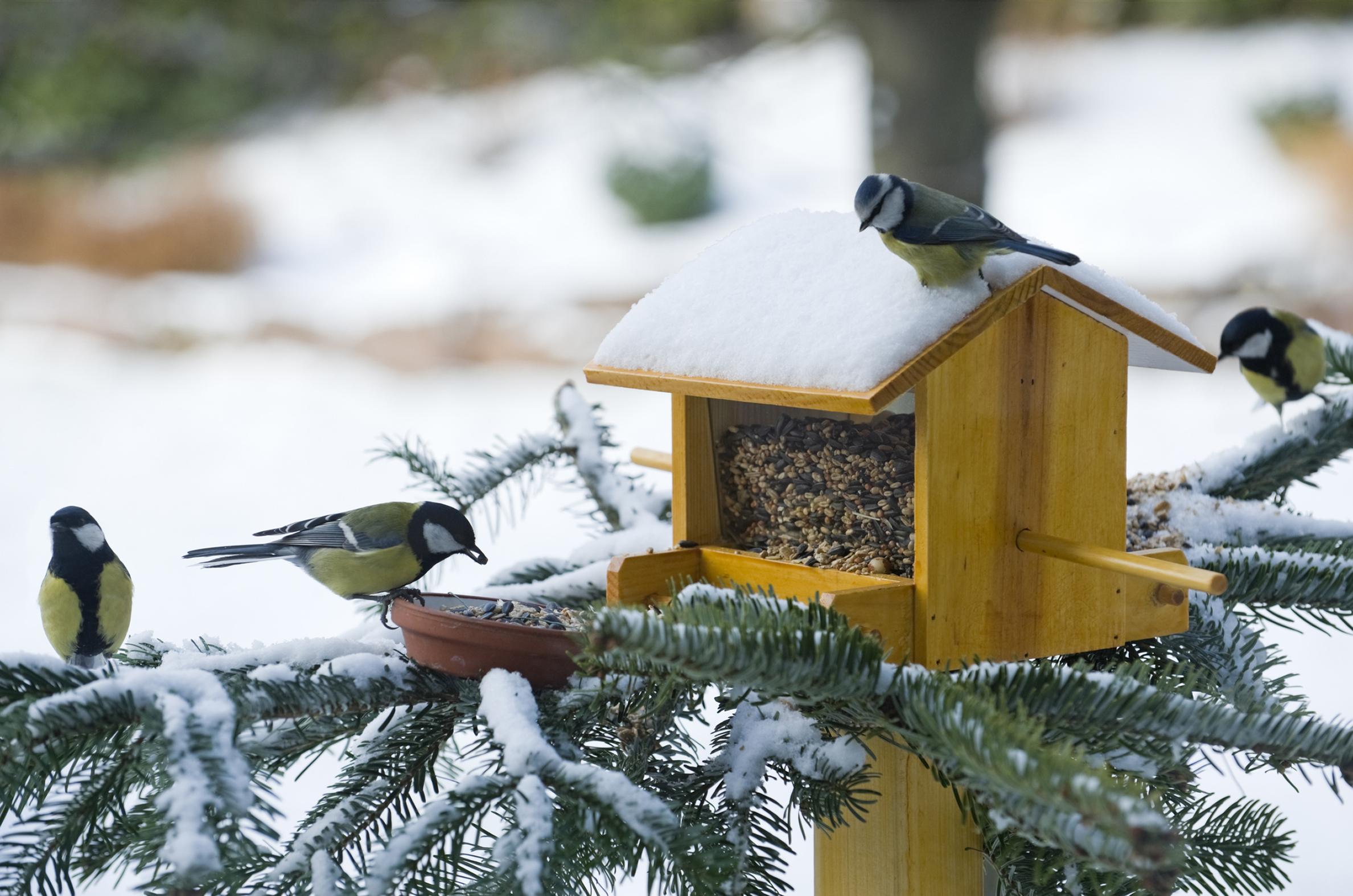 L'art et la manière de nourrir les oiseaux en hiver