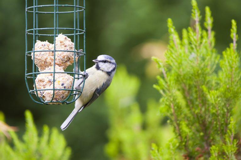 Read more about the article Que donner à manger aux oiseaux en hiver