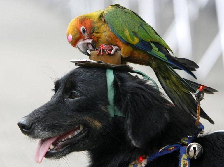Le chien, le perroquet et le verbe