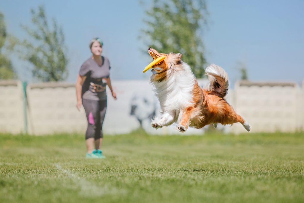 Les loisirs actifs avec son chien : quels exercices ?