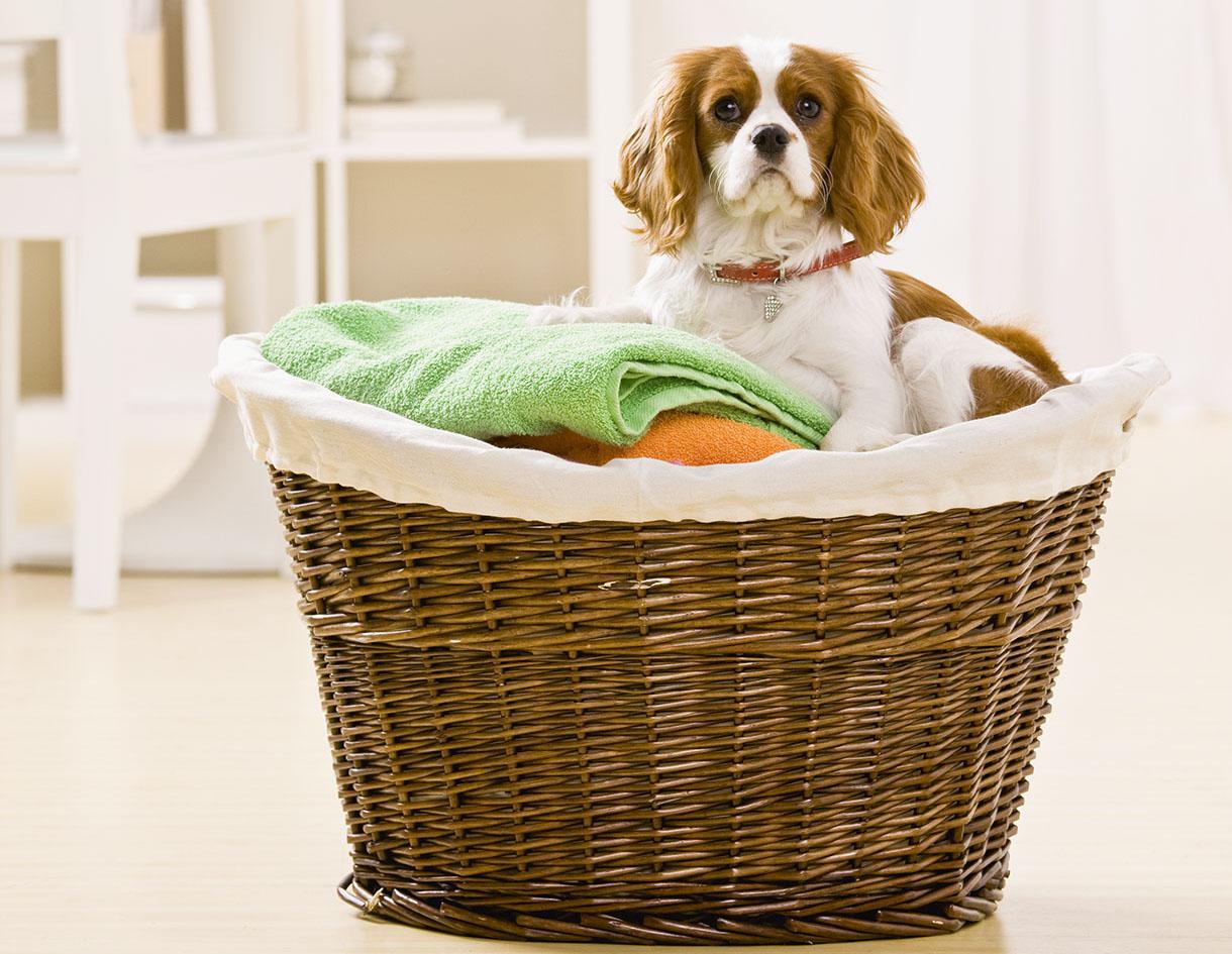 Apprendre mon chien à rester seul dans son panier