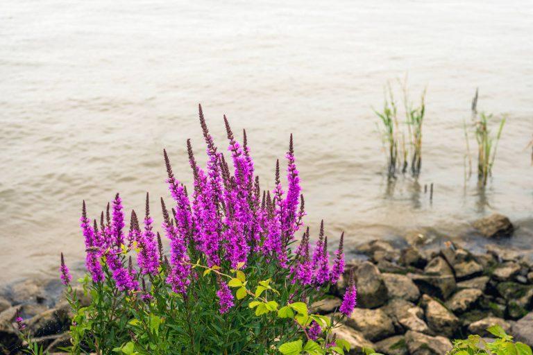 Read more about the article Biodiversité et espèces invasives