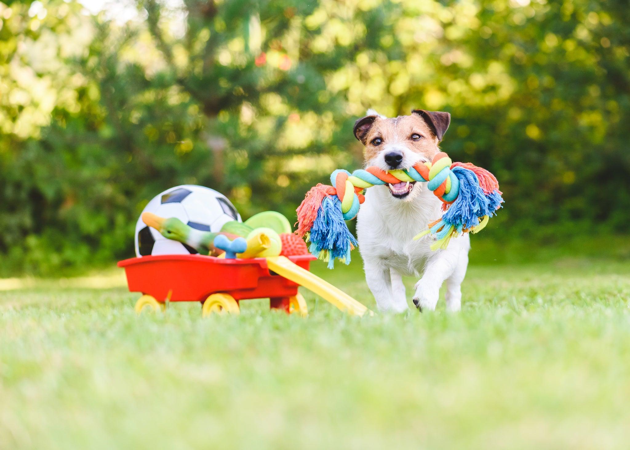 Les loisirs actifs avec son chien : jeu et apprentissage
