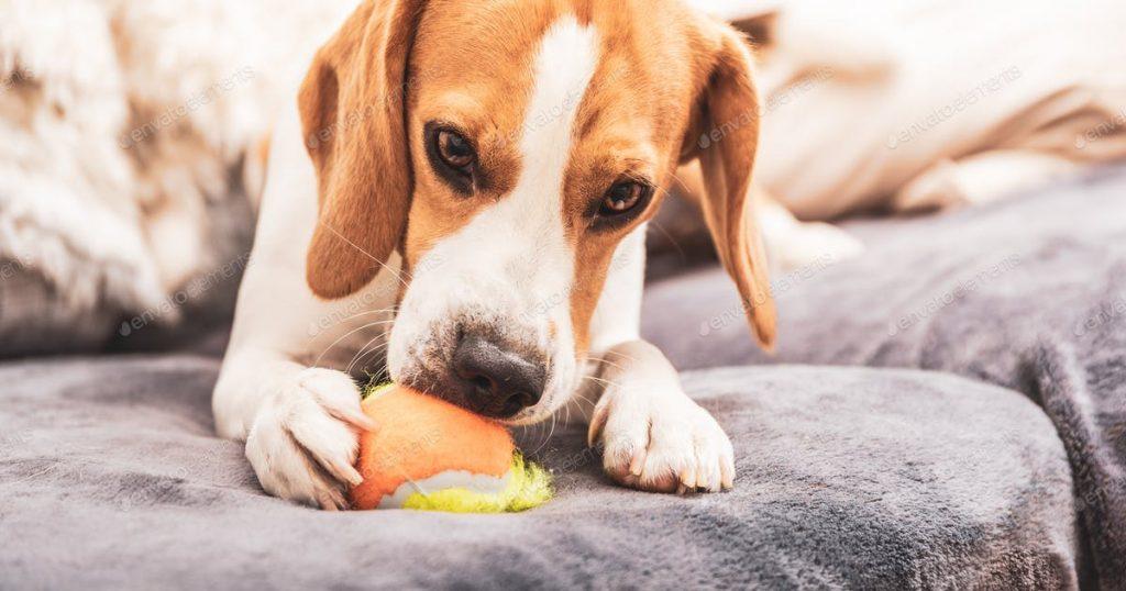 chien joue avec sa balle